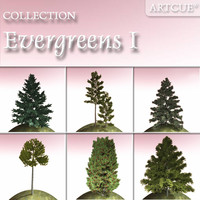evergreen trees 1