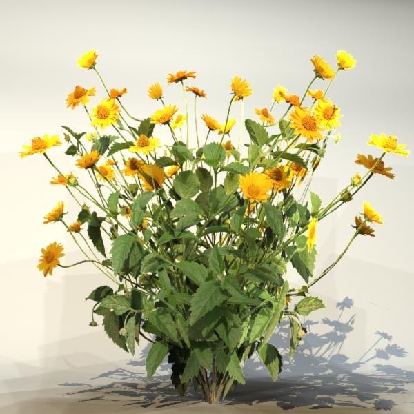 Flower_065