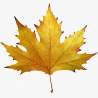 Autumn maple leaf v6