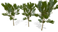 small oak tree 3d obj
