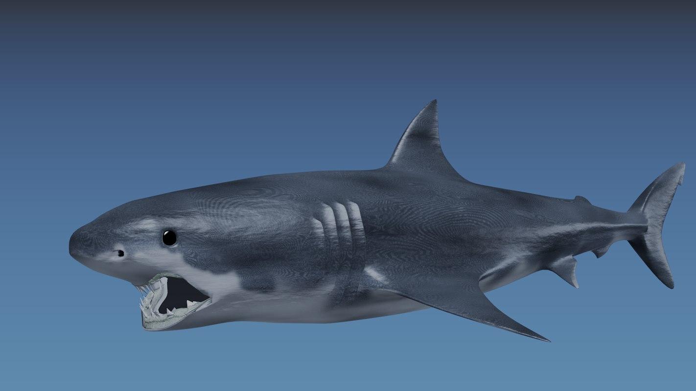 SharkComposite.png