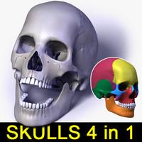 human skull bones 4 max