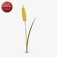 3d ear wheat model