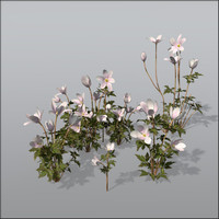 Wood anemone Bundle