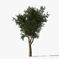 platanus tree bark 3d model