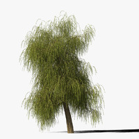 Willow Tree Type6