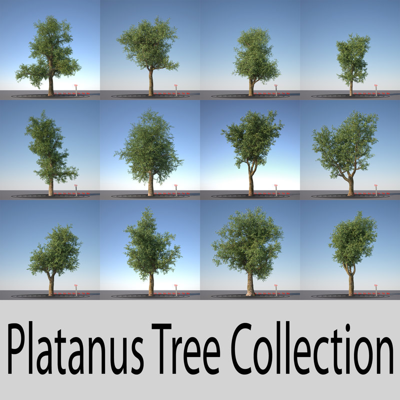 platanus_collection_header.jpg