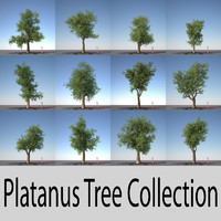 Platanus Tree Collection