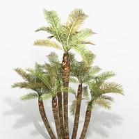 phoenix palms pack max