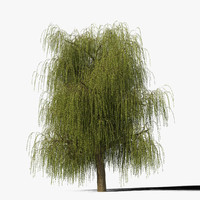 Willow Tree Type12