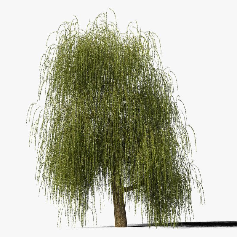 willow_typ4_render_f_0005.jpg