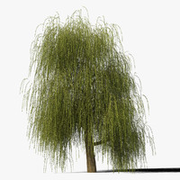 Willow Tree Type4