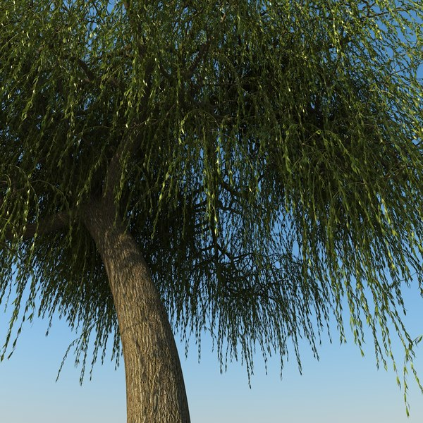 max willow trees - Willow Tree Collection... by Tora2097