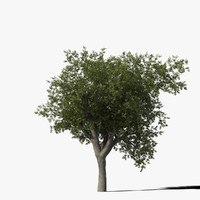 3ds max oak tree