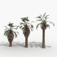 3ds max brahea palm