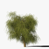 Willow Tree Type8
