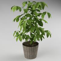 3d model plants flowerpot