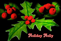 happy holiday holly 3ds