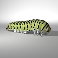 3d papilio machaon