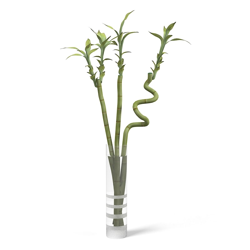 Bamboo Ikea Plant In the Vase 0001.jpg