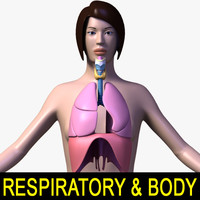 female body respiratory 3d model