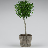 plant_47