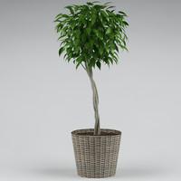 plant flowerpot 3d model