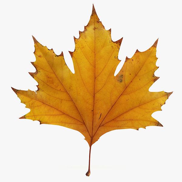 leaf_maple2-00.jpg
