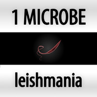leishmania - leishmania tropica