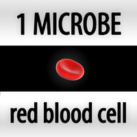 red blood cell - erythrocyte