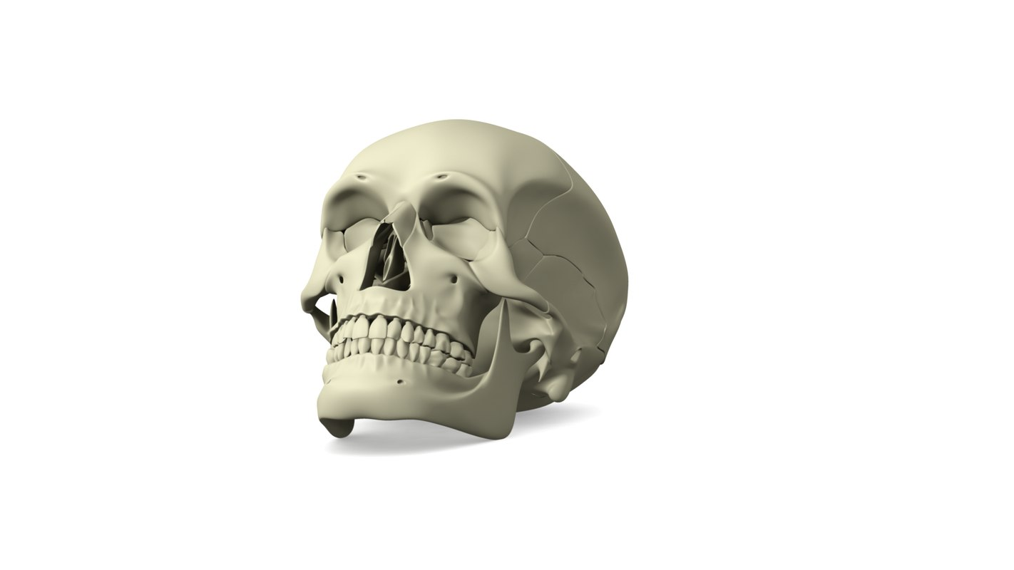 skull_only_00004.png