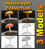 Mushroom Collection