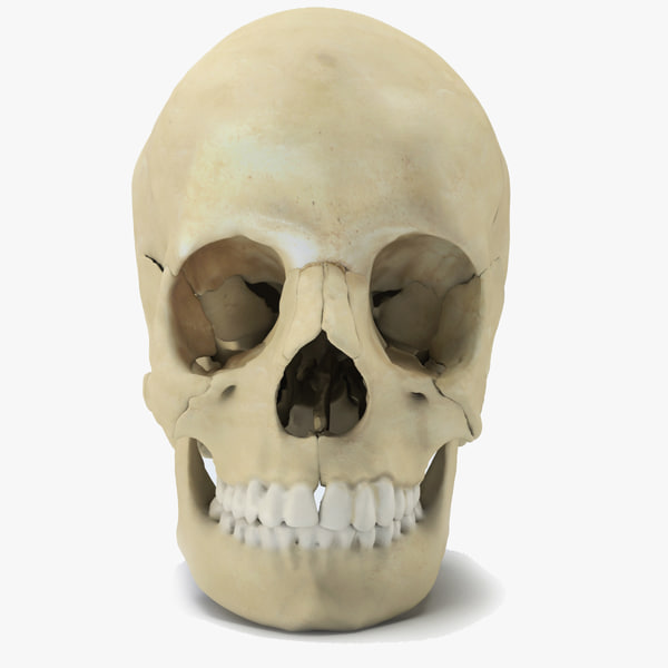3ds max skull parts scan - Human Skull... by ink3d