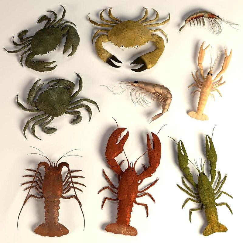 0acrustacean.jpg