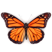 3ds max monarch butterfly