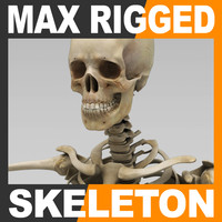 Human Skeleton 3ds Max Rigged