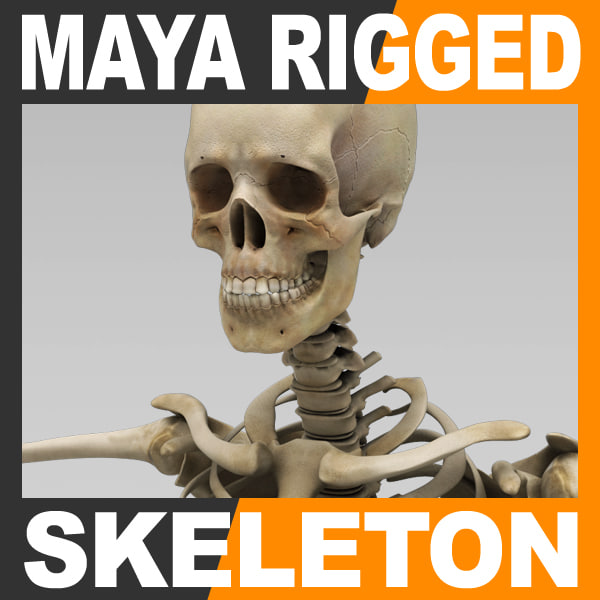 SkeletonMayaRigged_th001.jpg