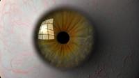 3d eyeball iris