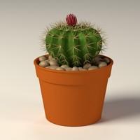 max cactus pot