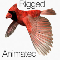 cardinal bird flight lightwave male 3d max