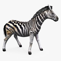 zebra animating 3d obj