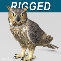 Great Horned Owl ( Folded Wings )