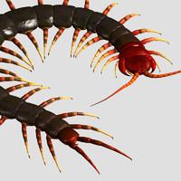 obj centipede