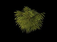Bush Plant01
