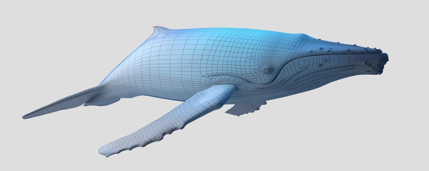 humpback_3D_model_sample01.jpg