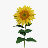 3d model sunflower sun flower