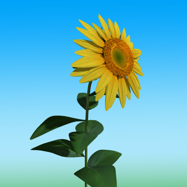 3d model sunflower sun flower - Sunflower... by abramsdesign
