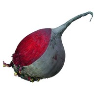 red beet 3d model