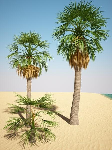 3d model washingtonia palm. Black Bedroom Furniture Sets. Home Design Ideas