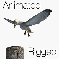 herring gull rigged animation 3d model